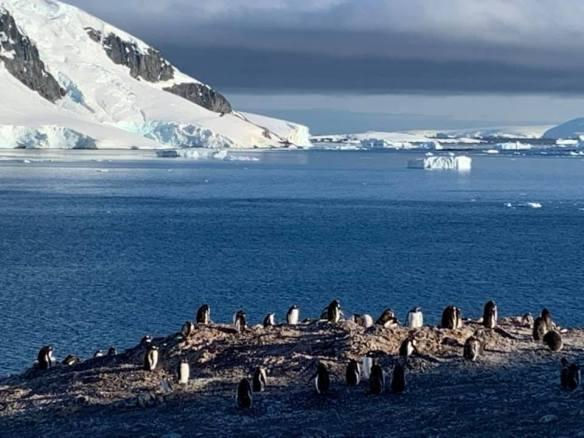 pinguins II